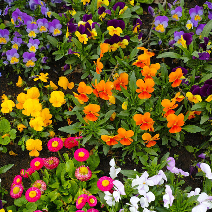 Lucky Reptile Herb Garden, Autumn Mix Seeds 2g - Out of Stock