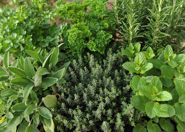 Lucky Reptile Herb Garden, Wild and Garden Herb Seeds 2g