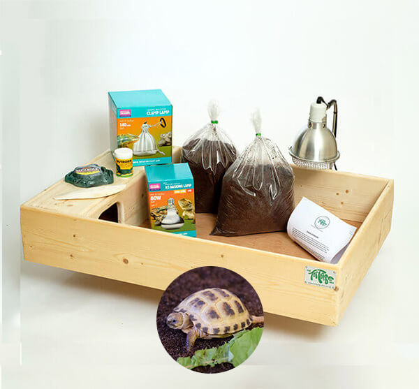 Horsfield Tortoise including a Large Complete Package - Out of Stock