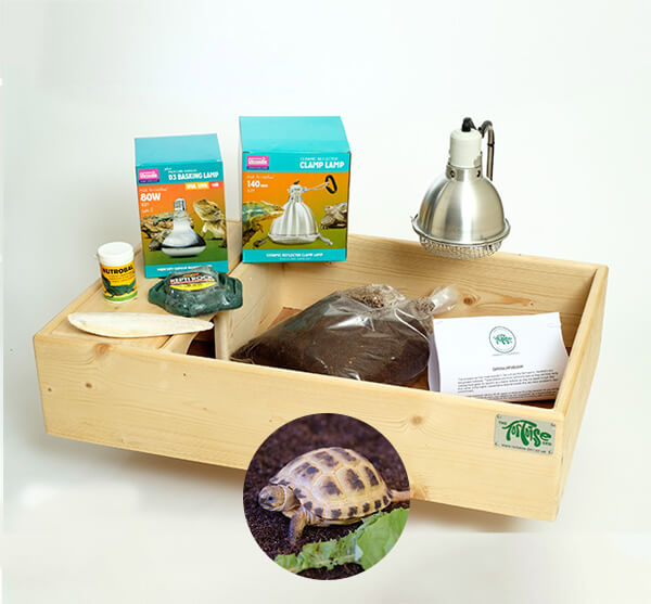 Horsfield Tortoise including a Standard Starter Package - Out of Stock