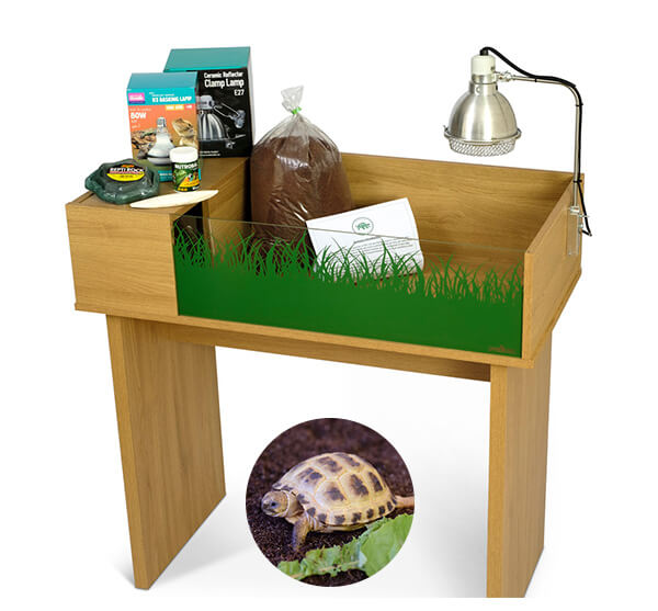 Horsfield Tortoise including a Viv Exotic Viva Starter Tortoise Table and Stand Complete Package