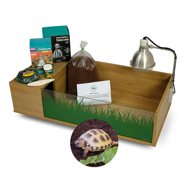 Horsfield Tortoise including a Viv Exotic Viva Starter Tortoise Table Complete Package (No Stand)