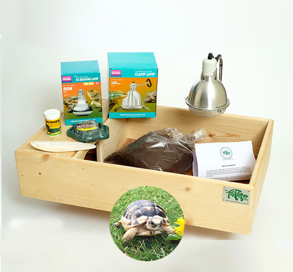 Marginated Tortoise including a Standard Starter Package - Out of Stock