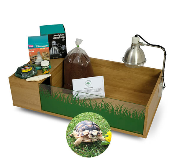 Marginated Tortoise including a Viv Exotic Viva Tortoise Table complete package (No Stand) - Out of Stock