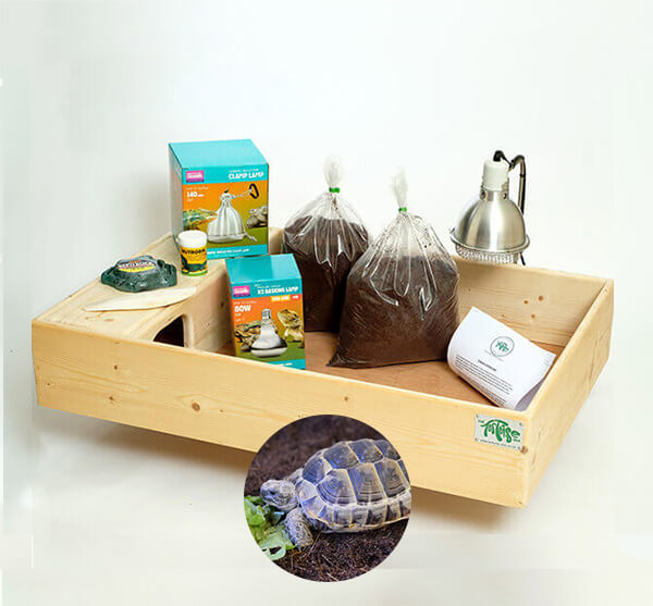 Mediterranean Spur-Thighed Tortoise including a Large Complete Package - OUT OF STOCK